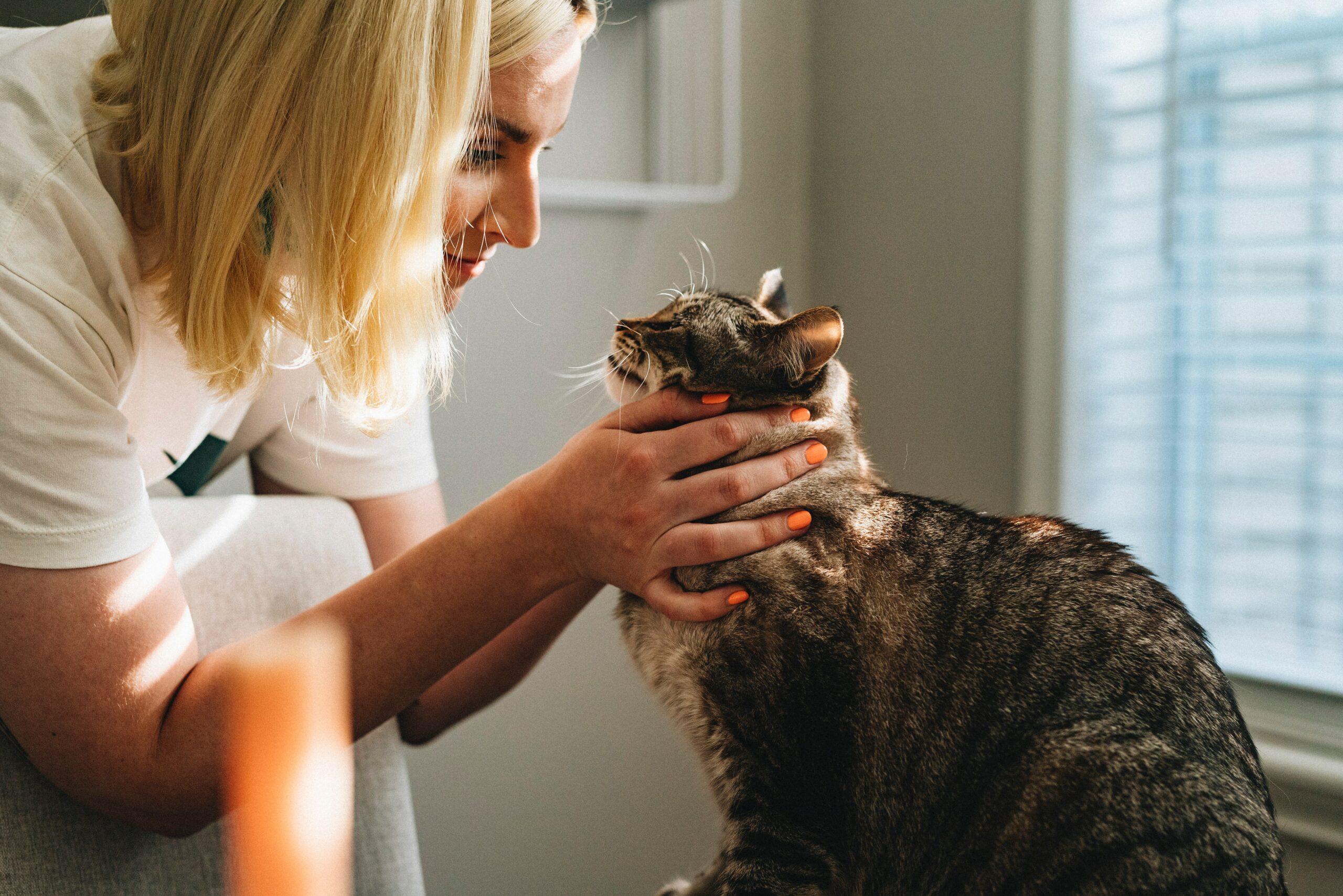 Vétérinaire maladies chat