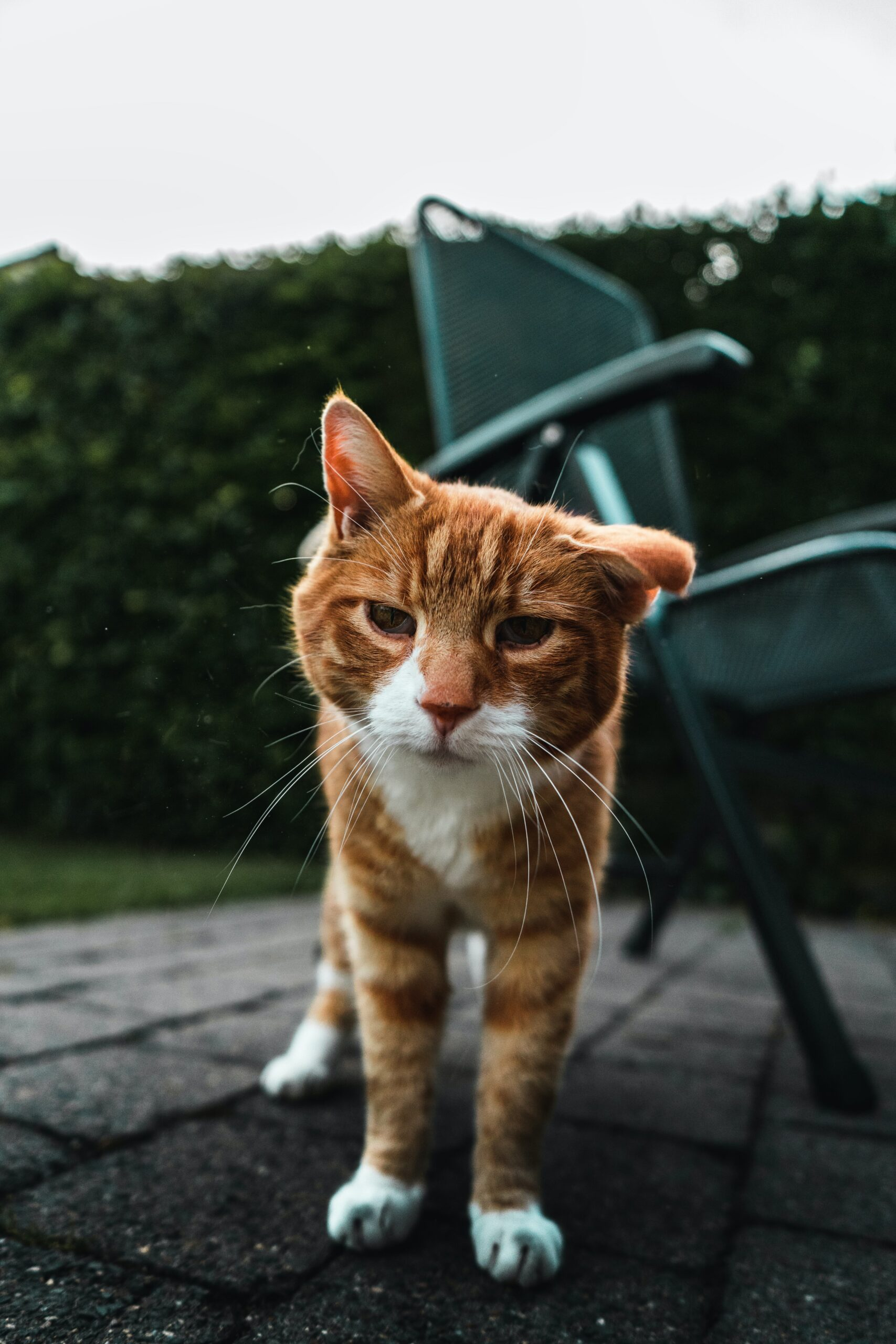 Chat âge